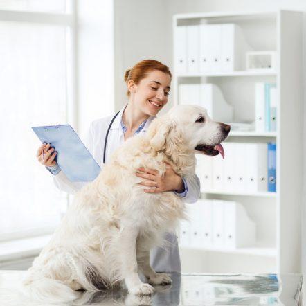 assurance-animaux-domestique